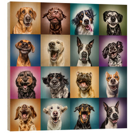 Wood print  Funny dog faces - Manuela Kulpa