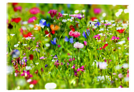 Acrylic print  Flower meadow - fotoping