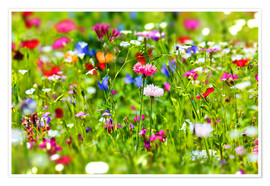Premium poster  Flower meadow - fotoping