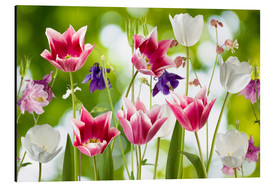 Aluminium print  Tulips and columbine flowers