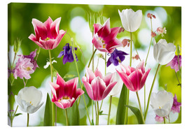 Canvas  Tulips and columbine flowers