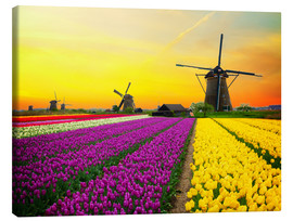 Canvas  Dutch windmills and fields of tulips