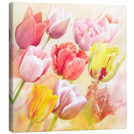Canvas print  Various tulips