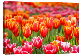 Canvas  Colorful tulips field