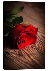 Canvas print  Red rose on wood