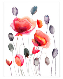 Premium poster  Poppy flowers and capsules