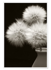 Premium poster Fluffy dandelions in a vase