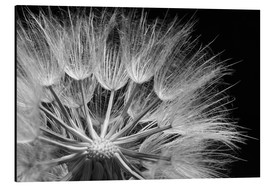 Aluminium print  Dandelion on black background