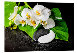 Acrylic print  White orchids and Yin-Yang stones