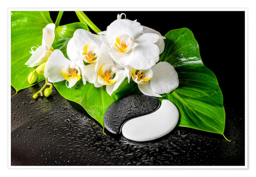 Premium poster White orchids and Yin-Yang stones