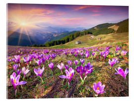Acrylic glass  Crocuses and the sun in spring