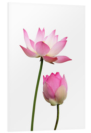 Forex  Lotus flowers