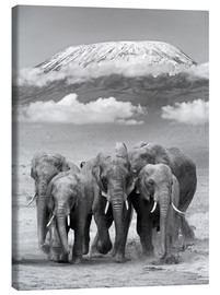 Canvas  Elephant herd with Kilimanjaro