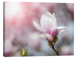 Canvas print  Magnolia flower in sunlight