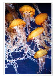 Premium poster  Yellow jellyfish in the ocean