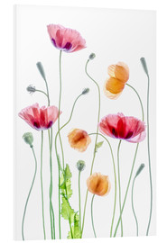 Foam board print  Poppy dance - Mandy Disher
