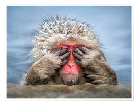 Premium poster  Japanese Macaque in a hot spring - Jan Christopher Becke