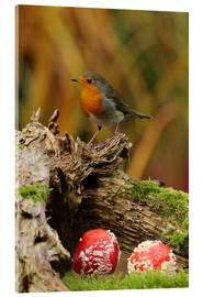 Acrylic print  Robin in the fairy forest - Uwe Fuchs