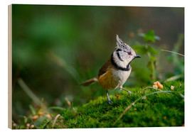 Wood print  Cute tit standing on the forest ground - Peter Wey