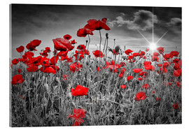 Acrylic print  Idyllic field of poppies - Melanie Viola