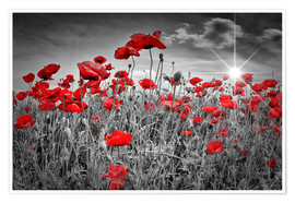 Premium poster  Idyllic field of poppies - Melanie Viola
