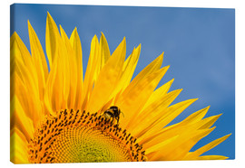 Canvas print  Sunflower against blue sky - Edith Albuschat