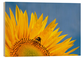 Wood print  Sunflower against blue sky - Edith Albuschat