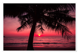 Premium poster Palm tree on tropical beach