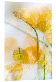 Acrylic print  Meconopsis Cambrica - Mandy Disher