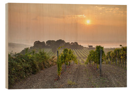 Wood print  Vineyards in the morning light, Lower Austria - Gerhard Wild