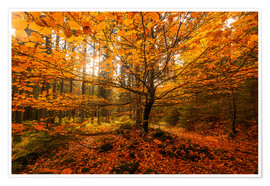 Premium poster Gold leaf - autumn forest