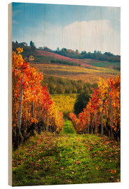 Wood print  Langhe in Autumn, Italy - Salvadori Chiara