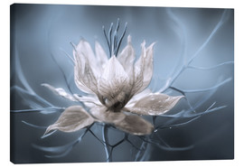 Canvas print  Nigella - Mandy Disher