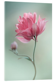 Acrylic print  Pink blush - Mandy Disher