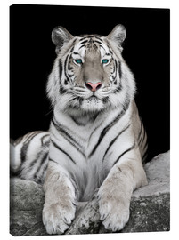 Canvas  Handsome tiger with color accents