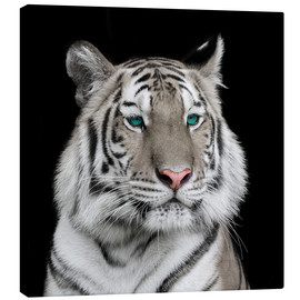 Canvas  Sumatran tiger with turquoise eyes