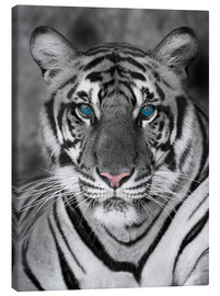 Canvas print  Tiger portrait with colour accents