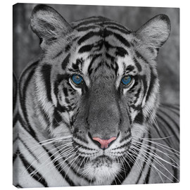 Canvas print  Tiger with color accents