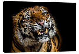 Canvas  Sumatran Tiger Roaring