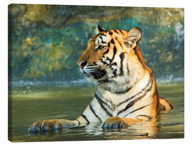 Canvas print  Tiger lying in the water