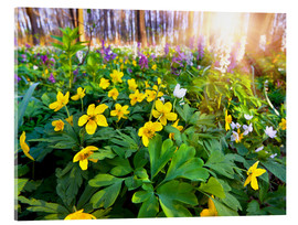 Acrylic glass  Blooming forest soil
