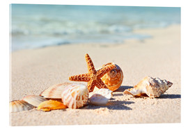 Acrylic print  Starfish and shells