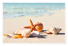 Premium poster  Starfish and shells