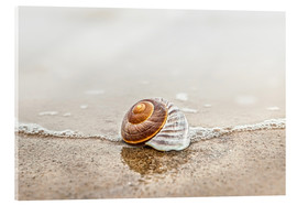 Acrylic print  Lonely shell on a beach