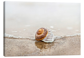 Canvas print  Lonely shell on a beach