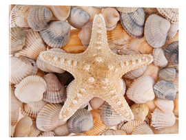 Acrylic print  Starfish on cockleshells