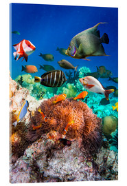 Acrylic print  Coral reef in the Maldives