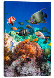 Canvas print  Coral reef in the Maldives