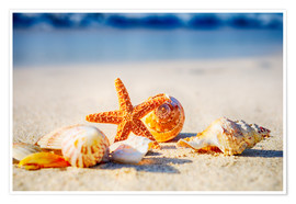 Premium poster Starfish and sea shells