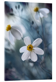 Acrylic print  Bidens - Mandy Disher